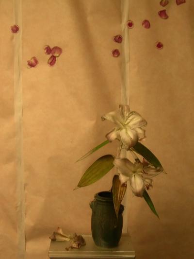 lilyjapanina